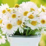 Top 5 Health Benefits of Chamomile! -Keep Fit Kingdom