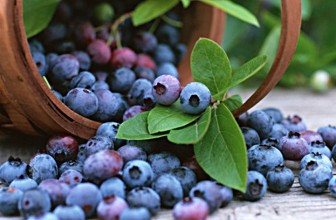 Top 5 Health Benefits of Blueberries!