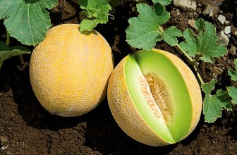 Top 5 Health Benefits of Galia Melon!