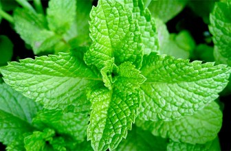 Top 5 Health Benefits of Mint!