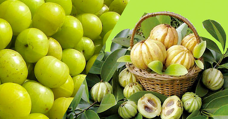 garcinia cambogia weight loss reviews south africa