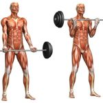 Your Muscles in Motion -Keep Fit Kingdom