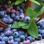 Top 5 Health Benefits of Blueberries - Keep Fit Kingdom