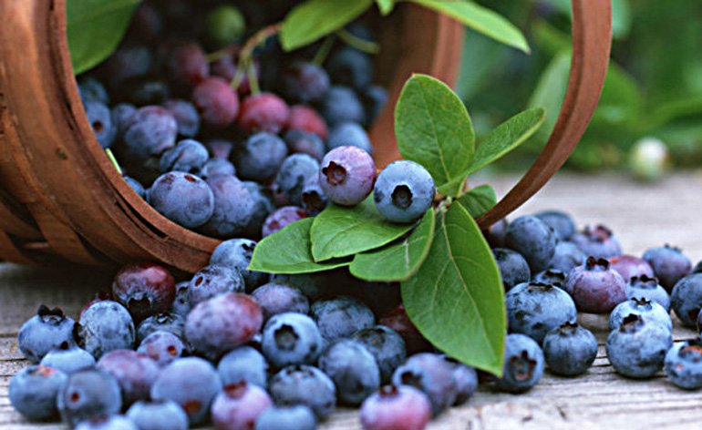 Top 5 Health Benefits of Blueberries - Keep Fit Kingdom