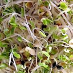 Top 5 Health Benefits of Broccoli Sprouts! - Keep Fit Kingdom