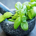 Top 5 Health Benefits of Basil! - Keep Fit Kingdom