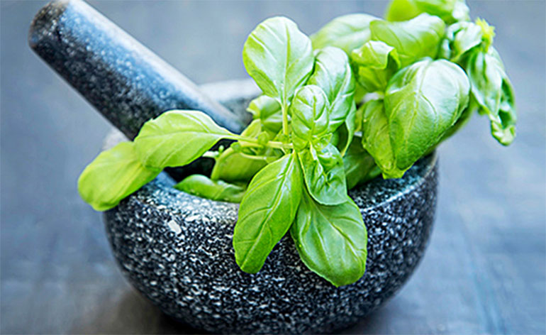 Top 5 Health Benefits of Basil! - Keep Fit Kingdom