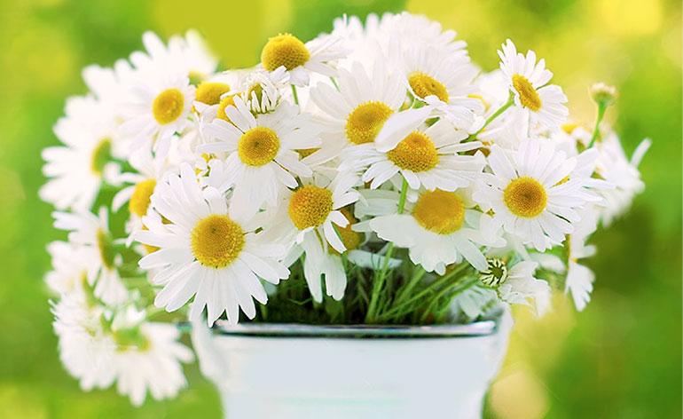 Top 5 Health Benefits of Chamomile! -Keep Fit Kingdom