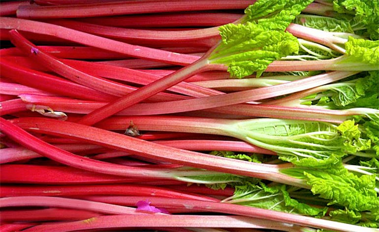 Top 5 Health Benefits of Rhubarb! -Keep Fit Kingdom