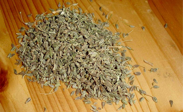Top 5 Health Benefits of Aniseed! -Keep Fit Kingdom