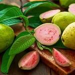 Top 5 Health Benefits of Guava! - Keep Fit Kingdom