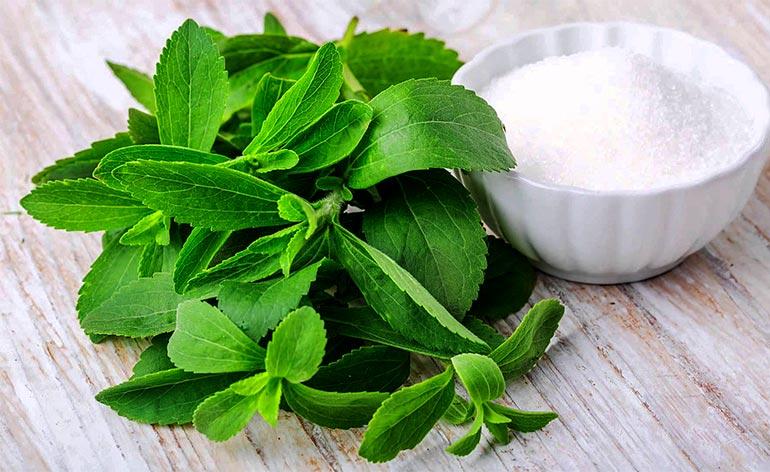 Top 5 Health Benefits of Stevia! -Keep Fit Kingdom