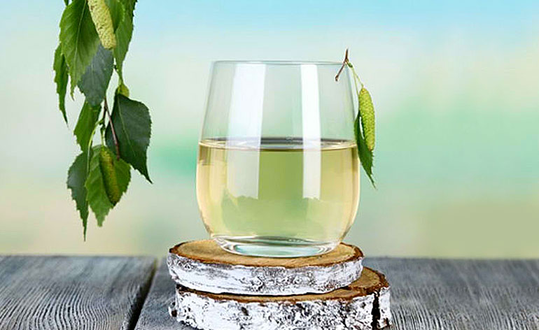 Top 5 Health Benefits of Birch Water Keep Fit Kingdom 770x472
