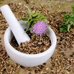 Top 5 Health Benefits of Milk Thistle Seeds! -Keep Fit Kingdom