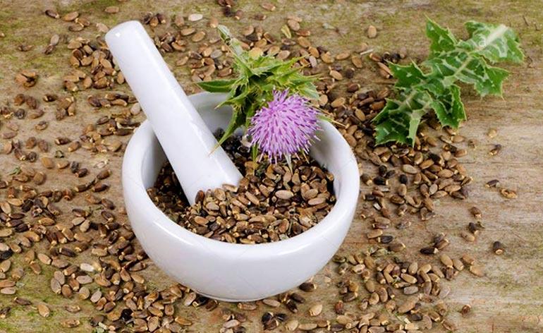 Top 5 Health Benefits of Milk Thistle Seeds Keep Fit Kingdom 770x472 1