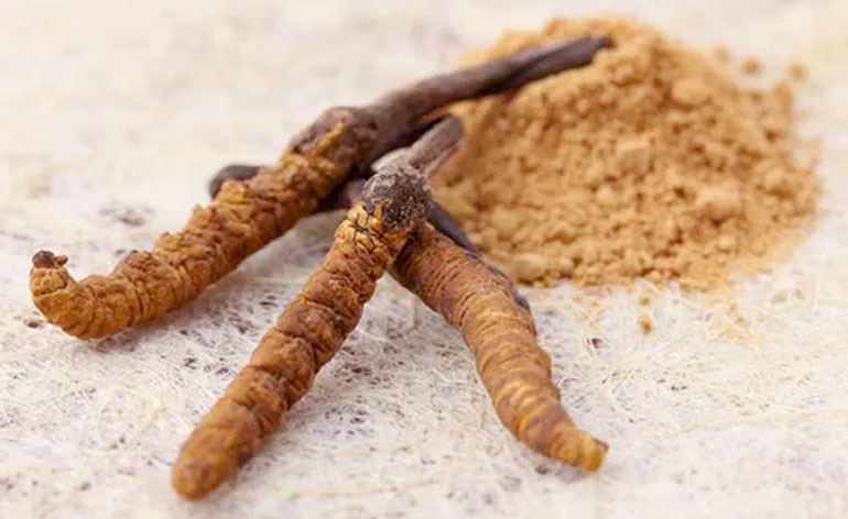 Top 5 Health Benefits of Cordyceps! - Keep Fit Kingdom