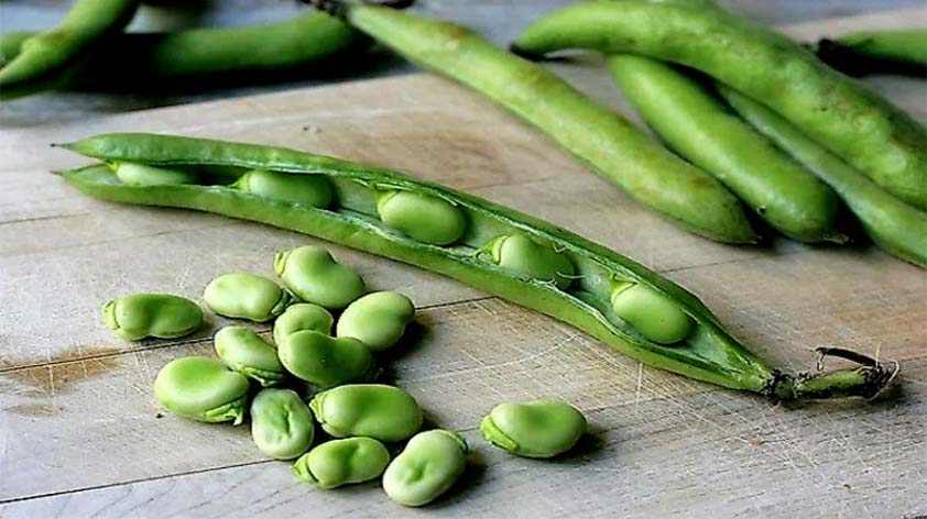 Top 5 Health Benefits of Fava Beans Keep Fit Kingdom 842x472