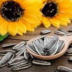 Top 5 Health Benefits of Sunflower Seeds! -Keep Fit Kingdom