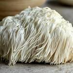 Top 5 Health Benefits of Lion's Mane Mushroom! - Keep Fit Kingdom