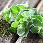 Top 5 Health Benefits of Oregano! - Keep Fit Kingdom