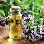 Top 5 Health Benefits of Oregano Oil Keep Fit Kingdom 842x472