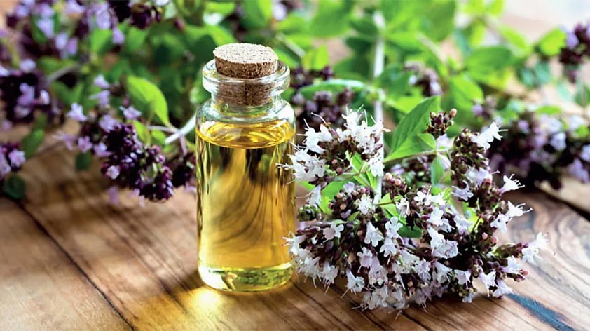 Top 5 Health Benefits of Oregano Oil! - Keep Fit Kingdom