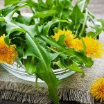 Top 5 Health Benefits of Dandelion Greens! - Keep Fit Kingdom