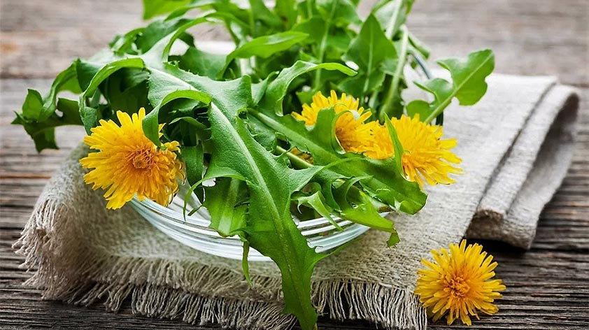 Top 5 Health Benefits of Dandelion Greens Keep Fit Kingdom 842x472