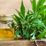 Top 5 Health Benefits of Cannabis Oil! - Keep Fit Kingdom
