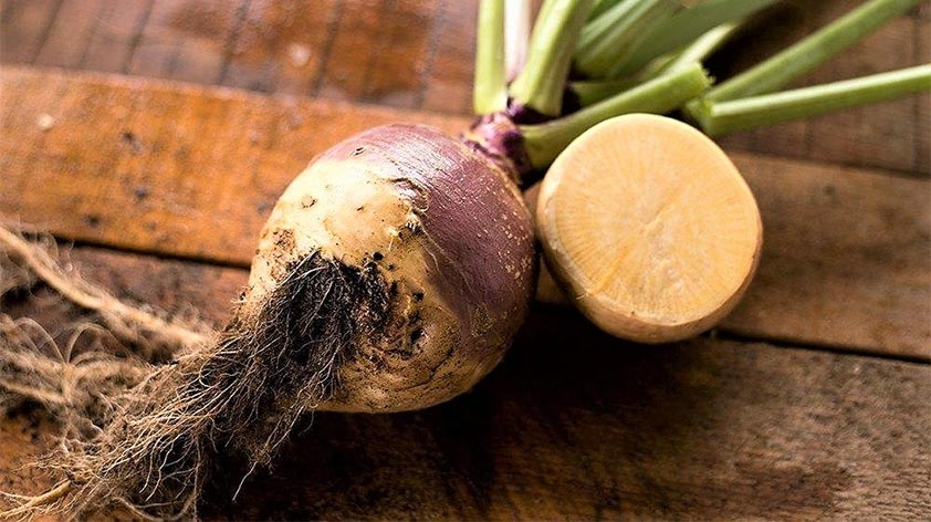 Top 5 Health Benefits of Rutabaga Keep Fit Kingdom 842x472 1