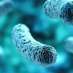 Microbiome Root of all Chronic Disease - Keep Fit Kingdom