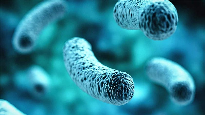 Microbiome Root of all Chronic Disease Keep Fit Kingdom 842x472