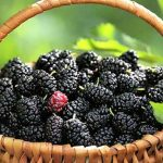 Top 5 Health Benefits of Mulberries! - Keep Fit Kingdom