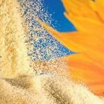 Top 5 Health Benefits of Lecithin Powder! - Keep Fit Kingdom