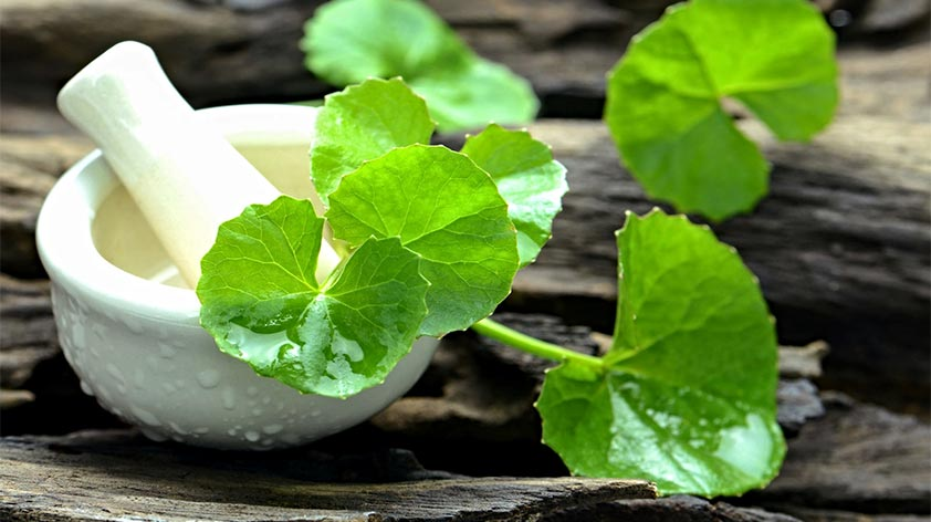 Top 5 Health Benefits of Brahmi -Keep Fit Kingdom