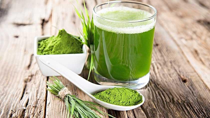 Top 5 Health Benefits of Wheatgrass -Keep Fit Kingdom