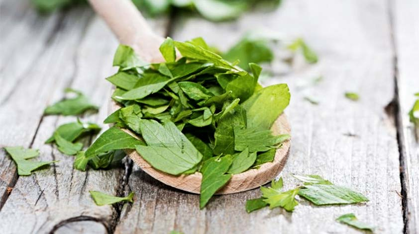 Top 5 Health Benefits of Lovage -Keep Fit Kingdom