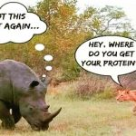 Hey Vegan Where Do You Get Your Protein 5 Common Myths Busted! -Keep Fit Kingdom