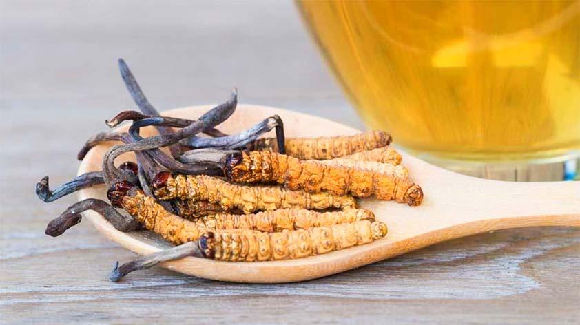 Cordyceps Mushroom Top 3 Health Benefits with Recipes - Keep Fit Kingdom