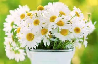 Top 5 Health Benefits of Chamomile!