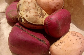 Top 5 Health Benefits of Kola Nuts!