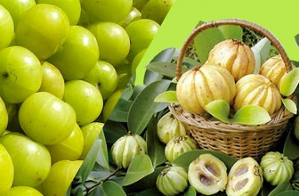 Is Your Garcinia Cambogia product genuine?
